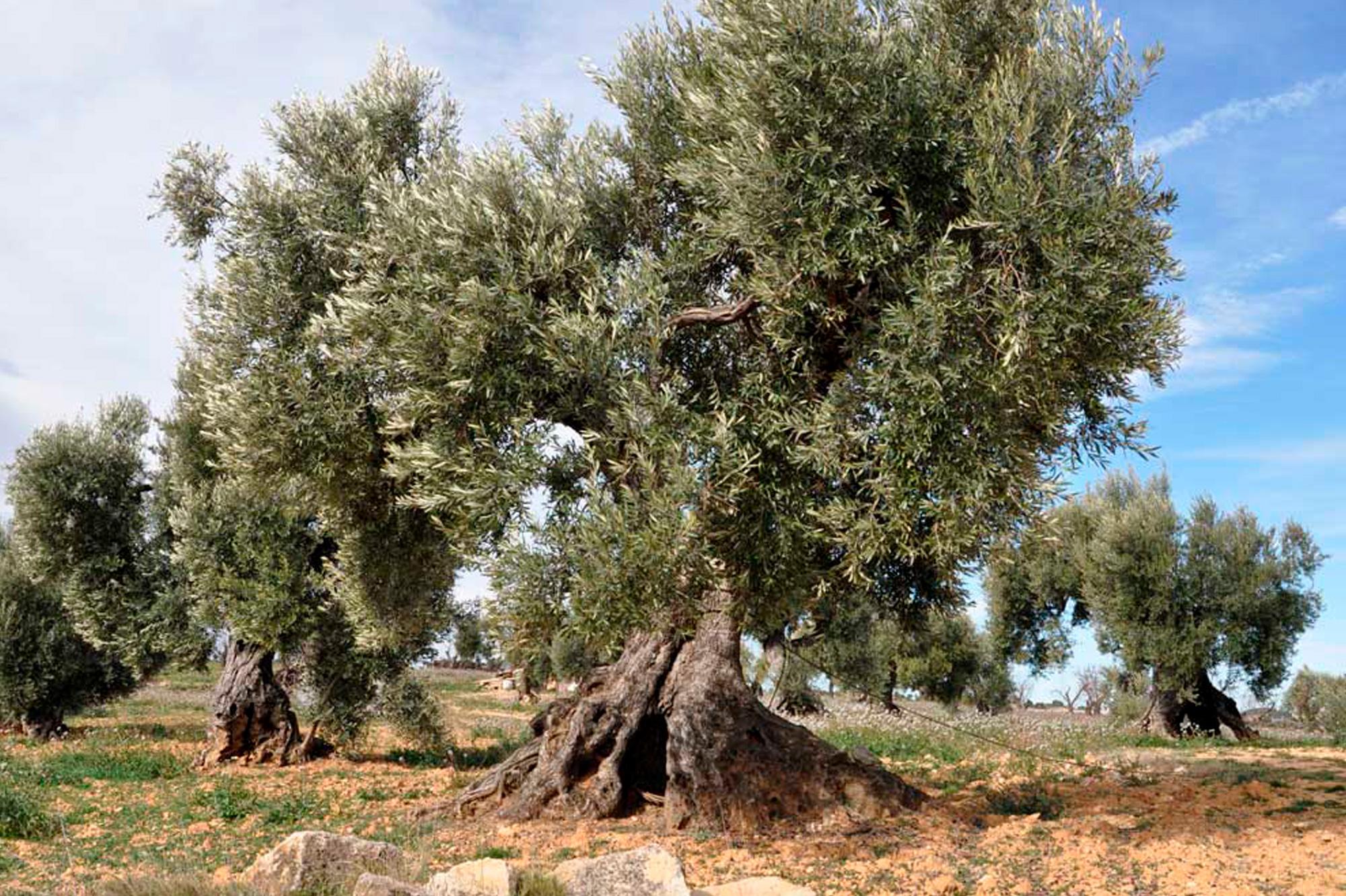 Ruta árboles singulares